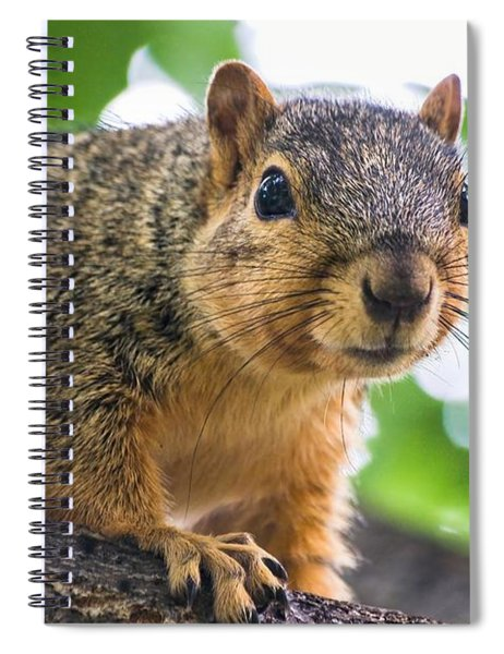Squirrel Close Up Spiral Notebook