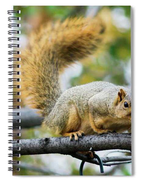 Squirrel Crouching On Tree Limb Spiral Notebook