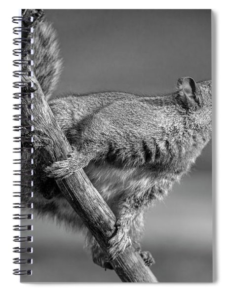 Squirrel In Black And White Spiral Notebook