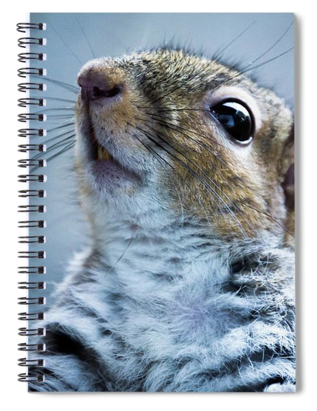 Squirrel With Nose In The Air Spiral Notebook