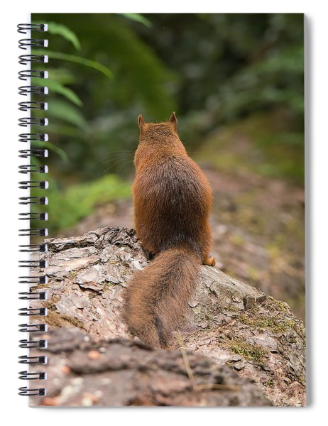Squirrel's Tale Spiral Notebook