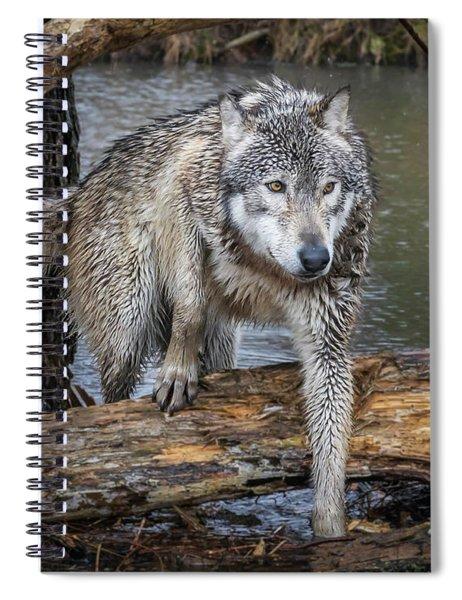 Stepping Over Spiral Notebook