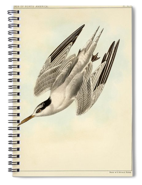 Sterna Elegans Spiral Notebook
