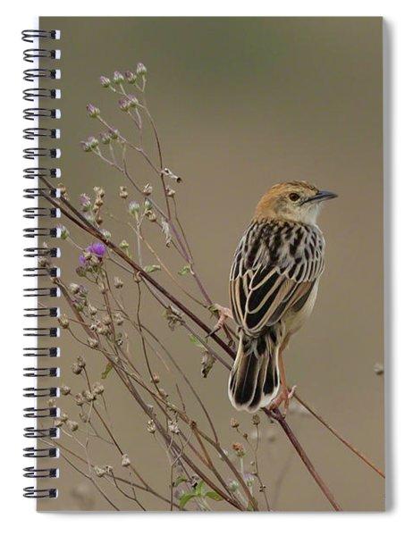 Stout Cisticola Spiral Notebook