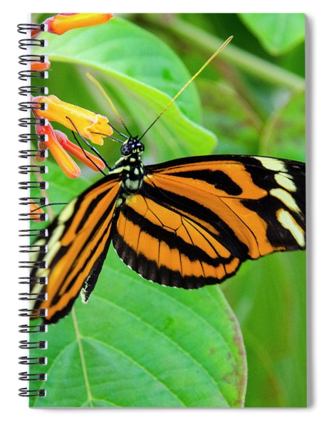 Striking In Orange And Black Spiral Notebook