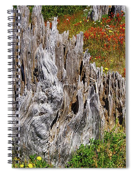 Stumps Of Trees Shattered In The 1980 Eruption Spiral Notebook