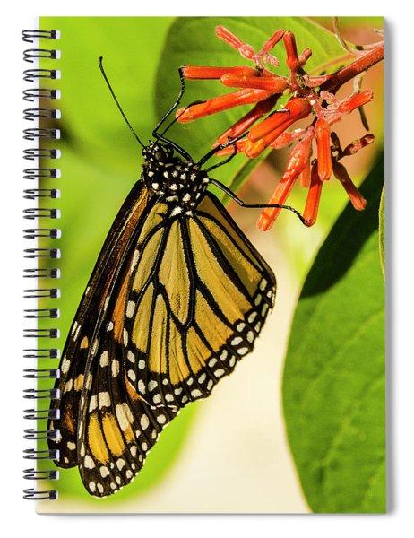 Stunning In Yellow And Orange Spiral Notebook