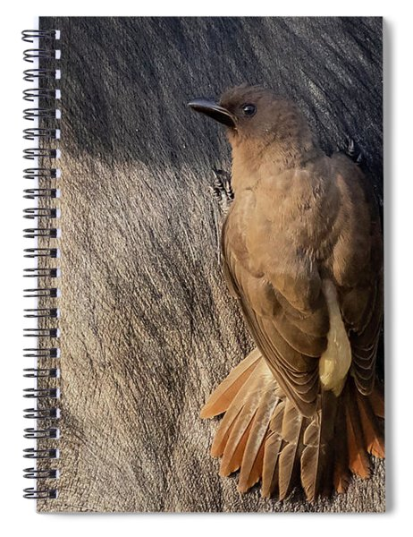 Sub-adult Yellow-billed Oxpecker On Cape Buffalo Spiral Notebook