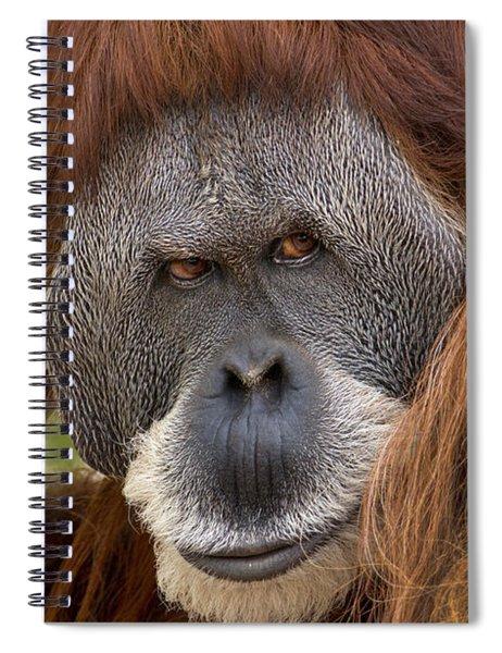 Sumatran Orangutan Male, Native Spiral Notebook