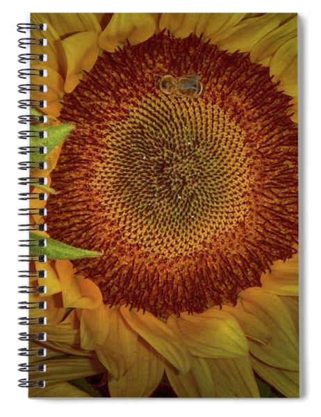 Sunflower Splendor Spiral Notebook