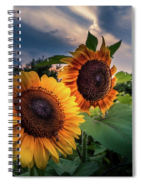 Sunflowers In Evening Spiral Notebook