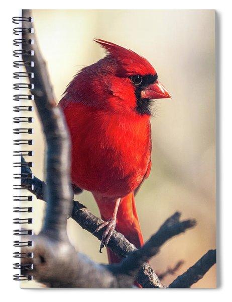 Sunny Cardinal Spiral Notebook