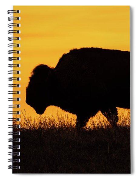 Sunrise Bison Spiral Notebook