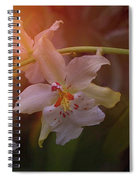 Sunrise Orchid Spiral Notebook