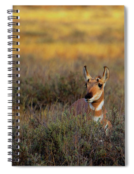 Sunset Pronghorn Spiral Notebook