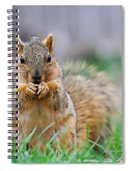Super Cute Fox Squirrel Spiral Notebook