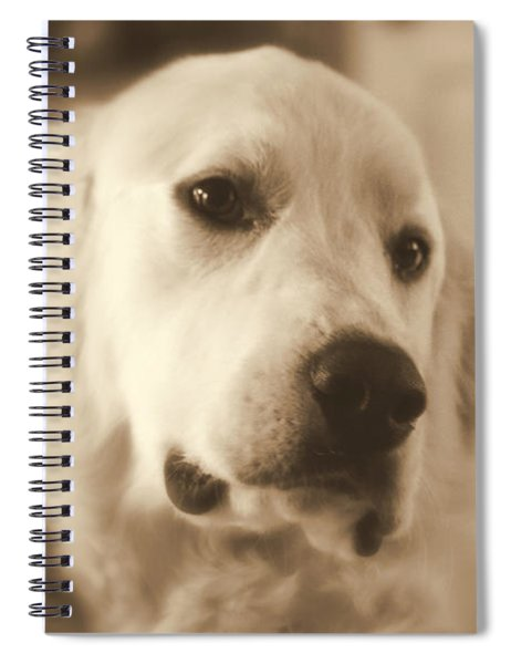 Sweet Boy Spiral Notebook by Patti Whitten