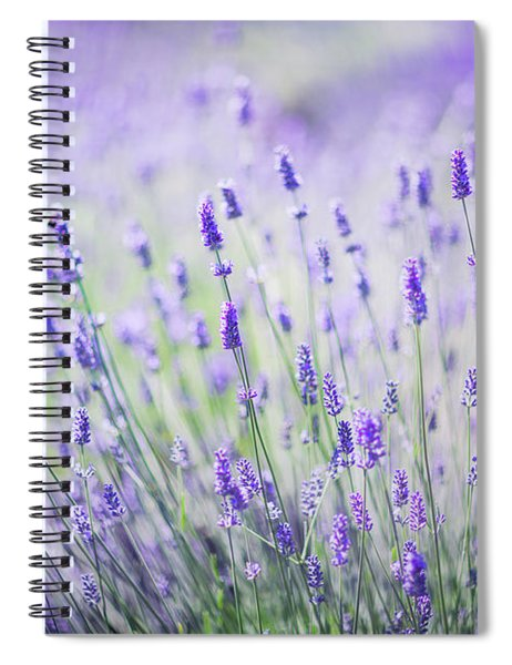 Sweet Lavender Spiral Notebook