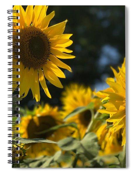 Sweet Sunflowers Spiral Notebook