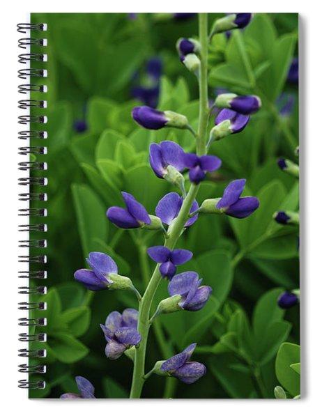 Sweetest Purple Spiral Notebook