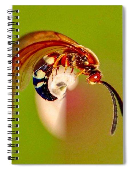 Swirly Wasp Spiral Notebook