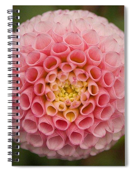 Symmetrical Dahlia Spiral Notebook