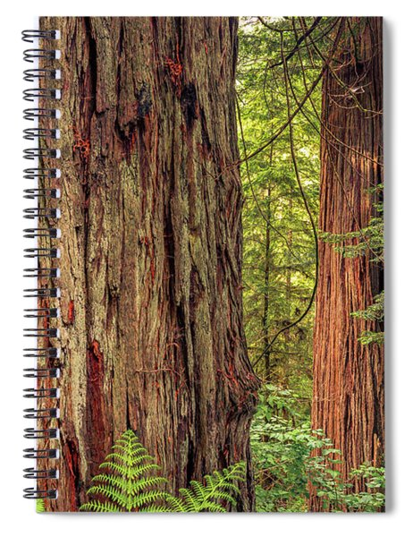 Tallest Living Things On Earth Spiral Notebook