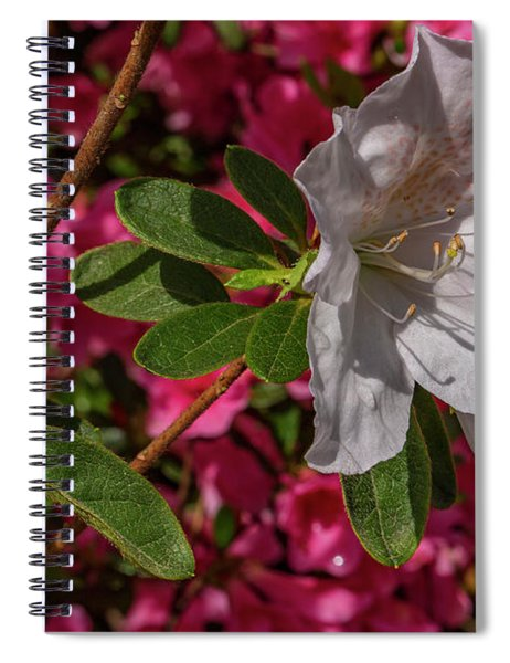 Texture And Contrast Spiral Notebook