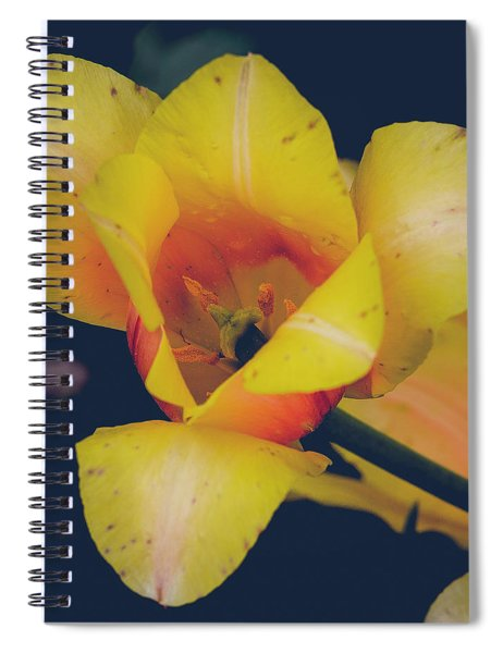 The Bees Knees Spiral Notebook