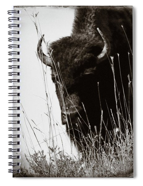 The Bison Roaming The Grasslands In Custer State Park South Dakota United States Of America Spiral Notebook