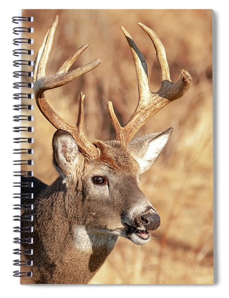 The Buck Stops Here Spiral Notebook