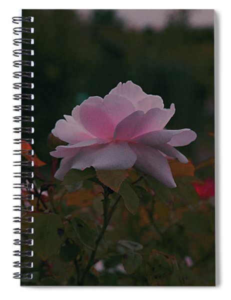 The Glowing Rose Spiral Notebook