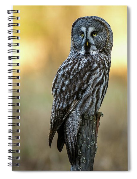 The Great Gray Owl In The Morning Spiral Notebook