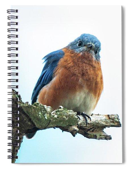The Inquisitive Bluebird Spiral Notebook