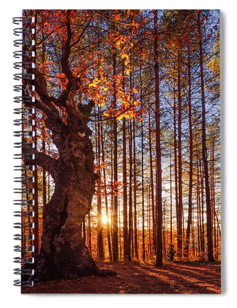 The King Of The Trees Spiral Notebook