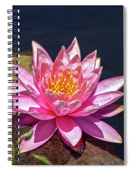 Spiral Notebook featuring the photograph The Lady Is Pink 02 by Arik Baltinester