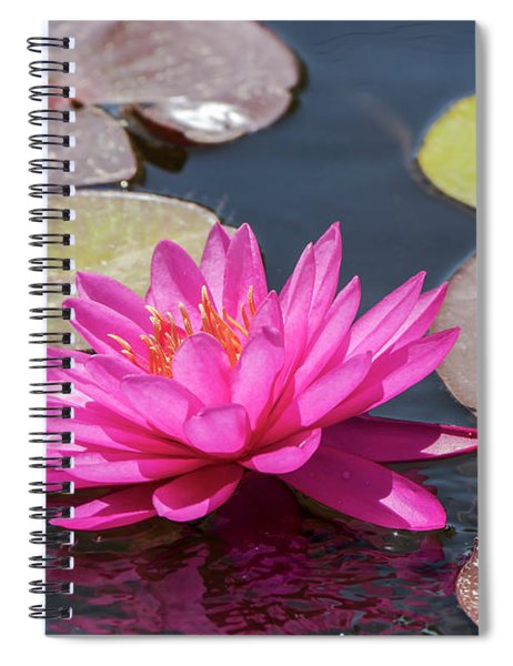 Spiral Notebook featuring the photograph The Lady Is Pink by Arik Baltinester