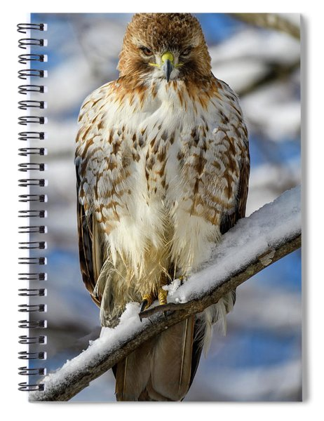 The Look, Red Tailed Hawk 1 Spiral Notebook