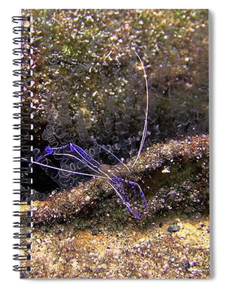 The Pederson Corkscrew Spiral Notebook
