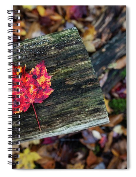 The Reason They Call It Fall Spiral Notebook