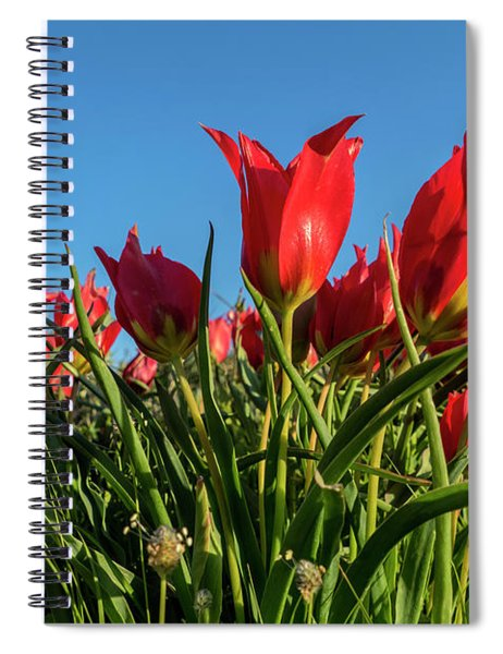 Spiral Notebook featuring the photograph The Red Grails Of Nature by Arik Baltinester