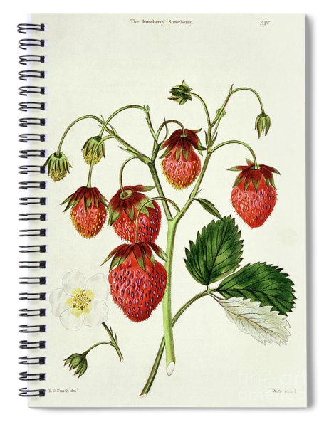 The Roseberry Strawberry, Engraved By Watte Spiral Notebook