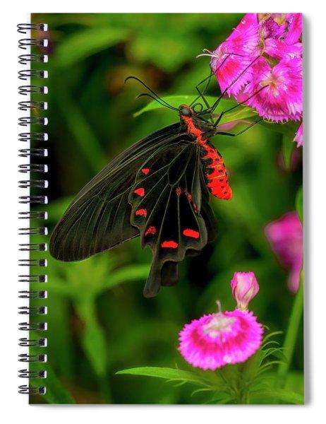 The Semperi Swallowtail Butterfly Spiral Notebook