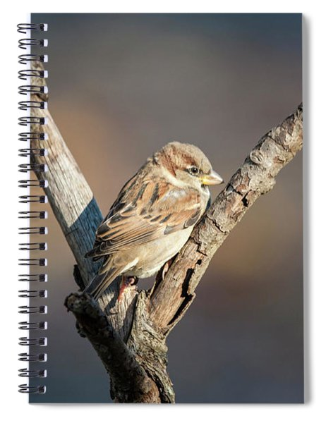 The Sparrow Spiral Notebook