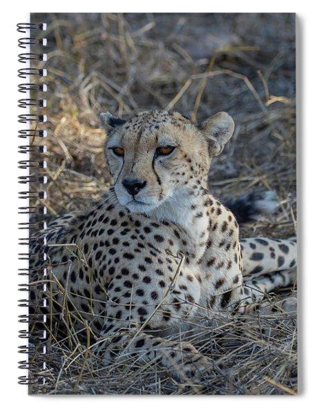 Cheetah In Repose Spiral Notebook