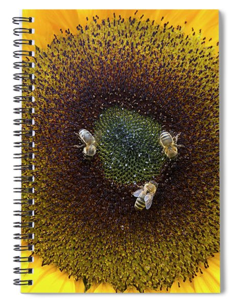 Three Bees Spiral Notebook