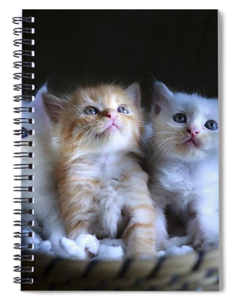 Three Little Kitties Spiral Notebook