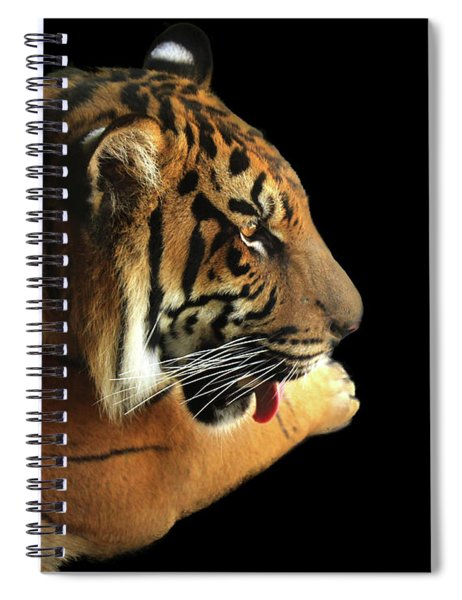 Tiger On Black Spiral Notebook by Alison Frank