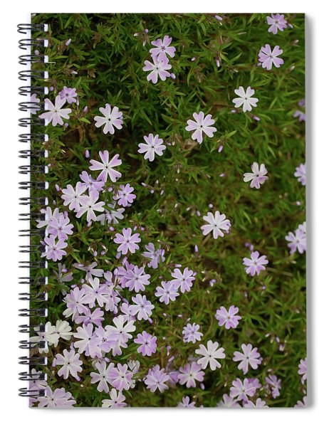 Spiral Notebook featuring the photograph Tiny Phlox by Emily Johnson