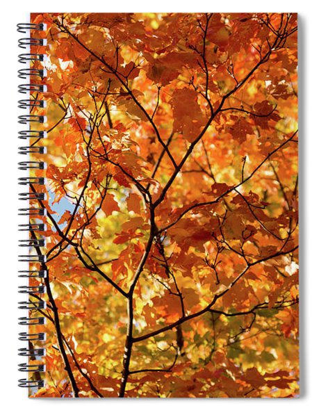 To Be Up In The Trees Spiral Notebook